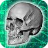Number of bones in the human skull